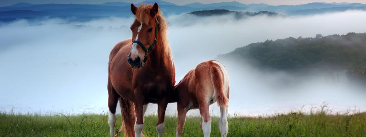 Antrozoologibloggen - relationen mellan djur och människor