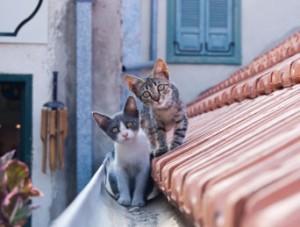 Katters kroppsspråk