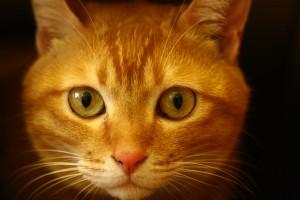 Relationen till hundar och katter – och om vårt fokus på att särskilja dem