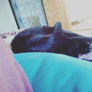 En hemlös katt hittar hem