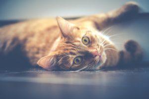 Har du erfarenheter av omplacerade/f.d. hemlösa/traumatiserade katter?