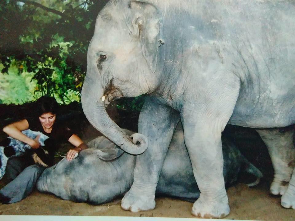 Antrozoologisk jobbdagbok 2 – elefanters kultur och funderingar
