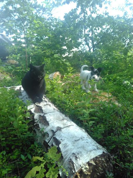 Introducera katt och hundvalp