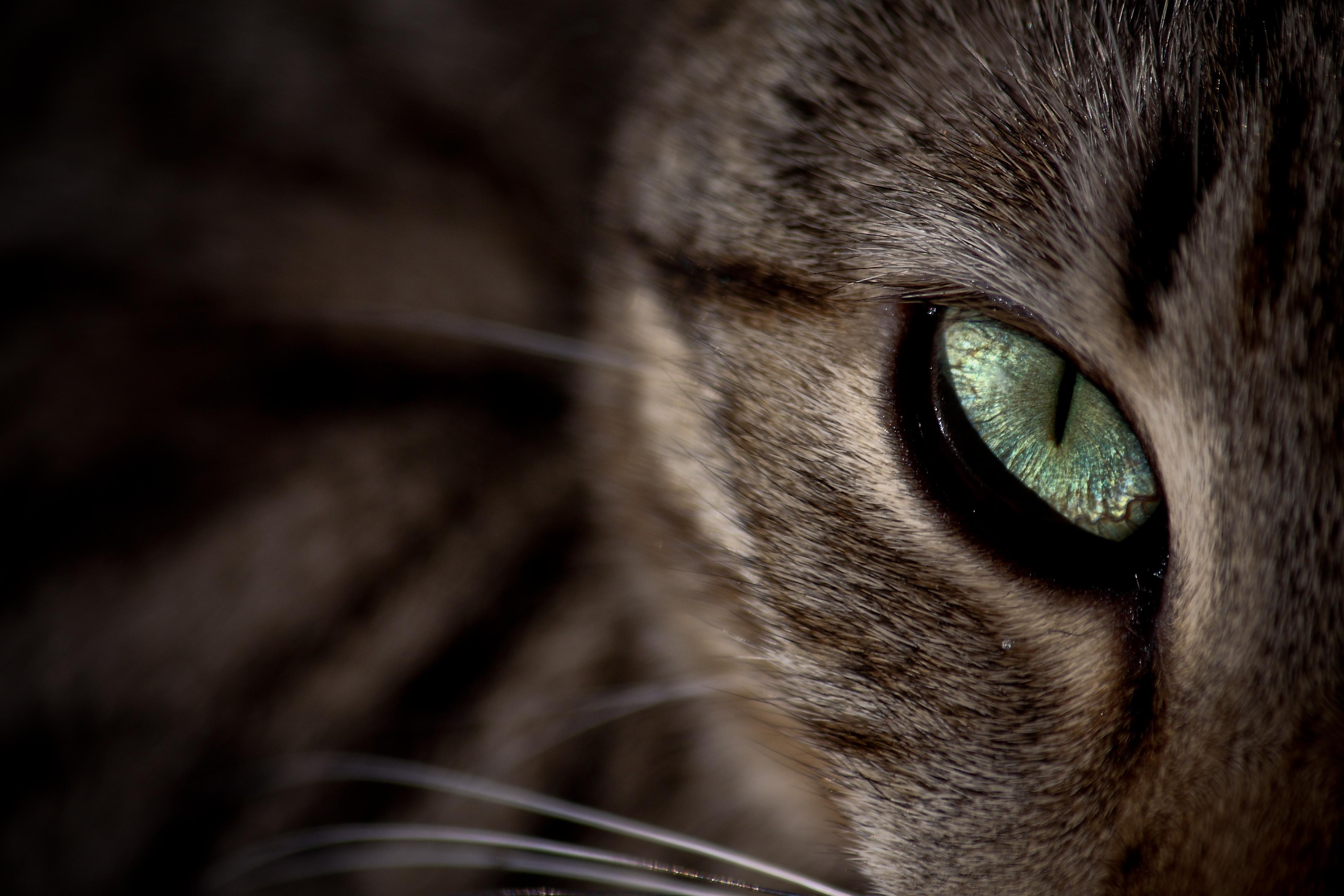 Kattbeteenden och problem 1 – Den jamande katten