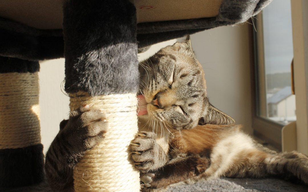 Nya lagar för kattägare! Vad gäller egentligen?