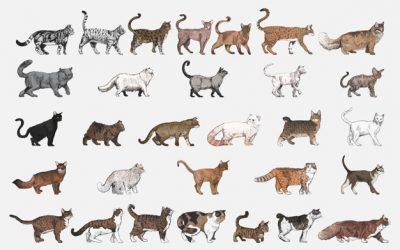 Kattpsykologer, finns de? Om problembeteenden och kattproblem!