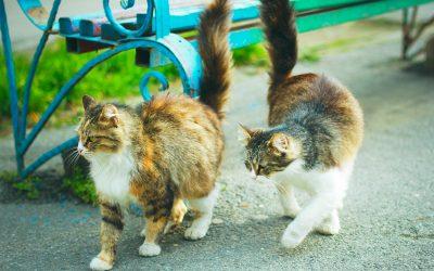Kattbeteende och problem 2 – osämja katter emellan