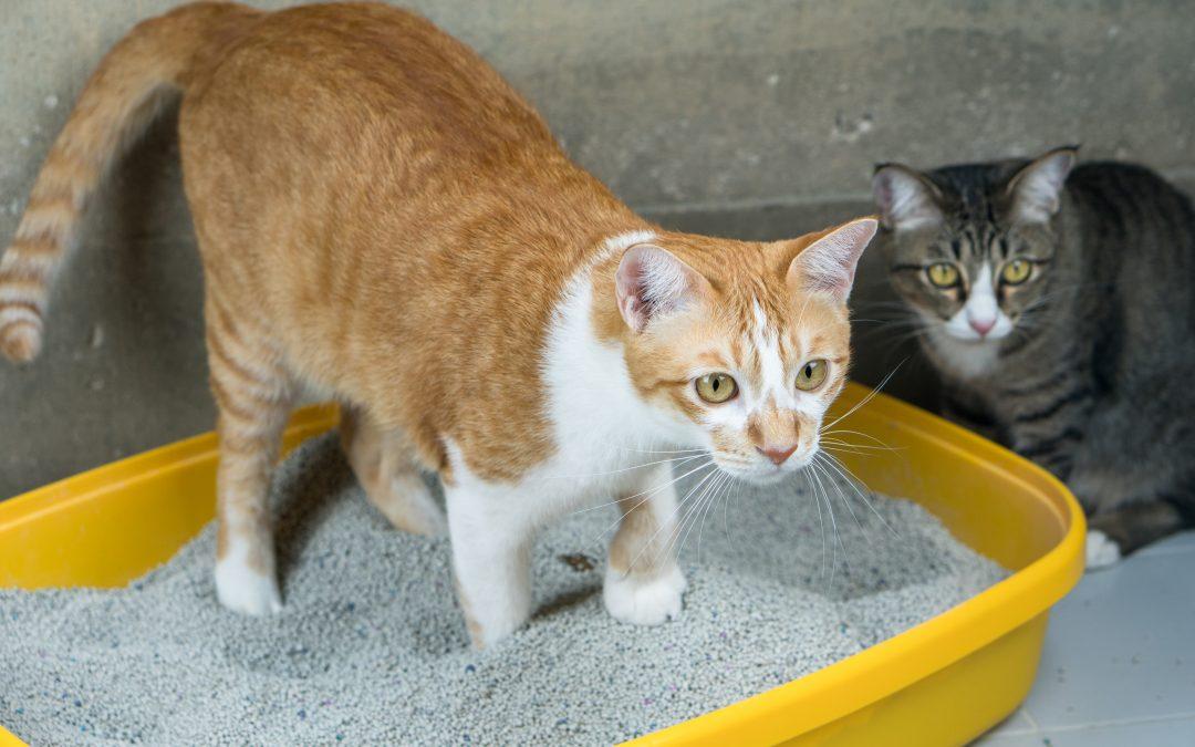 Kattbeteenden och problem 3 – katten som kissar utanför lådan