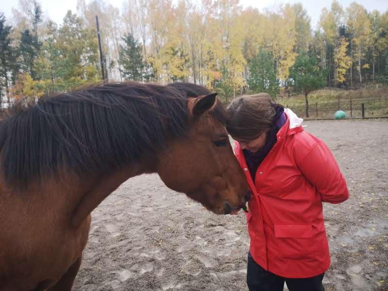 Vad händer i hästvärlden?